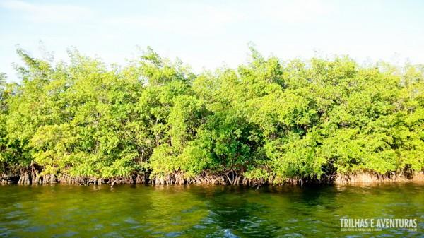 Manguezal da Lagoa de Guaraíras, em Tibau do Sul