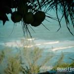 Praia do Amor vista por entre os coqueiros