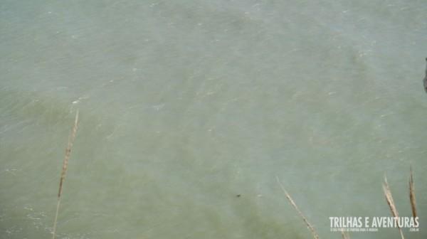 O ponto escuro lá no mar é uma enorme tartaruga que apareceu pra gente