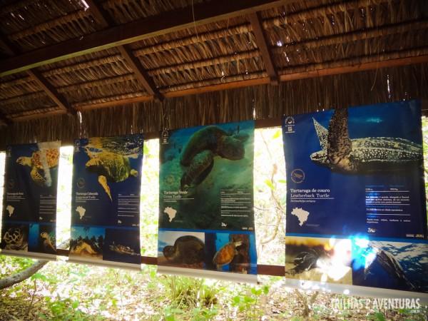 Exposição do TAMAR no Santuário Ecológico de Pipa