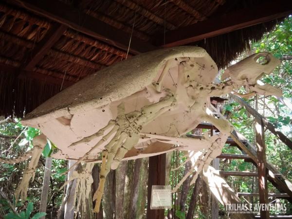 Esqueleto completo de uma enorme tartaruga no Projeto Tamar do Exposição do TAMAR no Santuário Ecológico