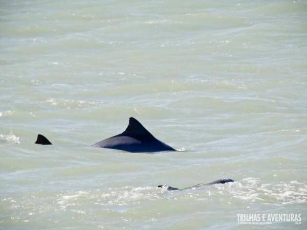 Golfinhos durante o Stand Up Paddle na Praia do Madeiro, em Pipa