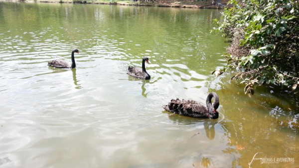 Adorei o lago com os cisnes, mas NÃO ALIMENTE os animais