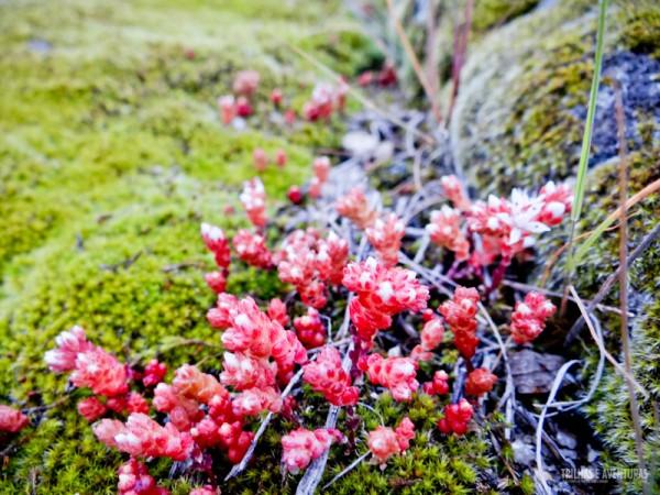 Pequeninas Flores em volta do Castelo de Marialva