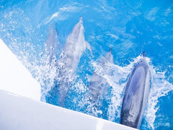 Dezenas de golfinhos acompanham os passeios de barco em Noronha