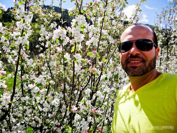 Macieiras na beira da estrada de Manteigas, aos pés da Serra da Estrela
