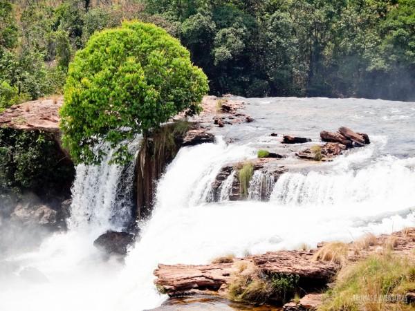 Árvore resistente as forças das águas da Cachoeira da Velha no Jalapão