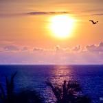 Pôr-do-sol com pelicanos ficam ainda mais especiais