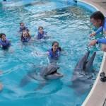 Golfinhos recebendo instruções do treinador