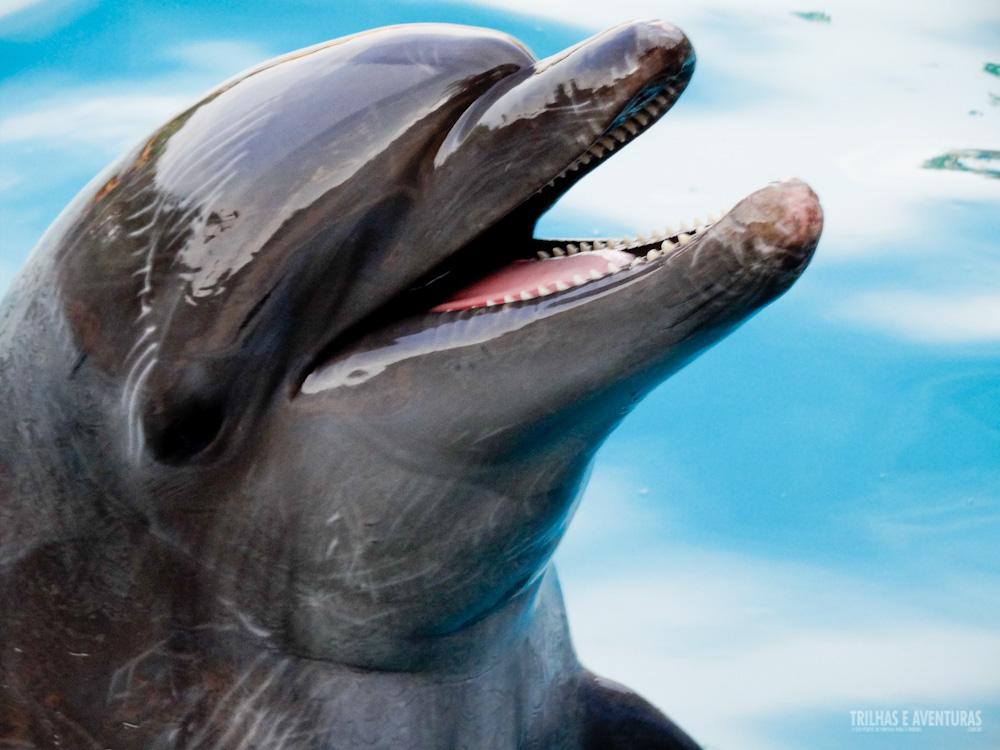 Tem coisa mais linda? Amo os Golfinhos!