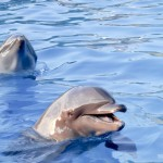 Golfinhos da Dolphin Adventure em Nuevo Vallarta
