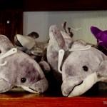 E na saída é só passar na loja e comprar uma lembrança dos golfinhos