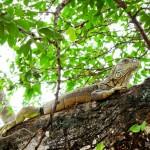 Santuário da Iguana Verde