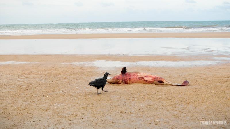Golfinho morto na praia do Ceará