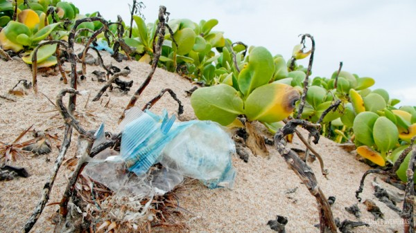 Muito plástico e lixo espalhado nas praias