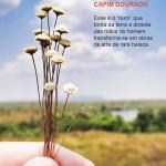 Página 40 do e-book