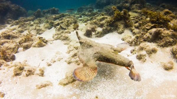Peixes exóticos são facilmente avistados em Taipu de Fora