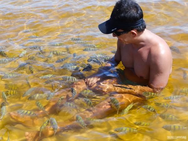 Até os adultos viram crianças brincando com os peixinhos