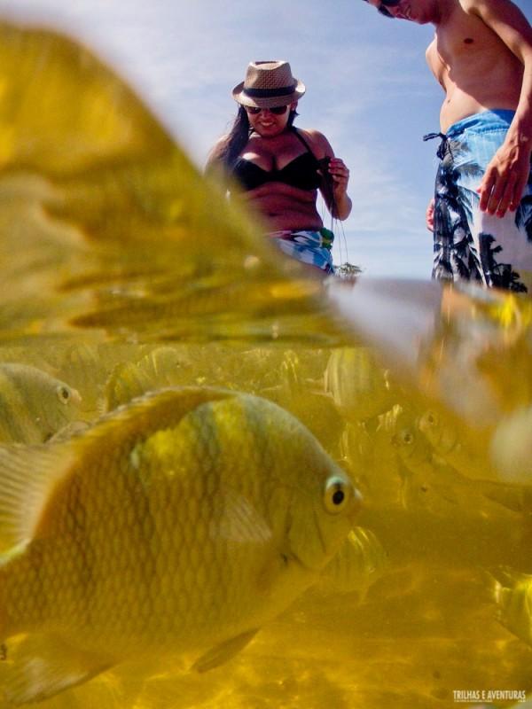 Os peixes estão de olho em tudo! Eles vem comer na mão