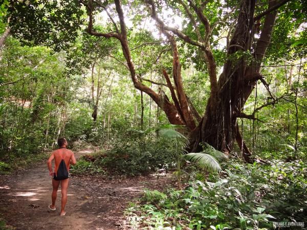 Na trilha para a Praia da Engenhoca em Itacaré
