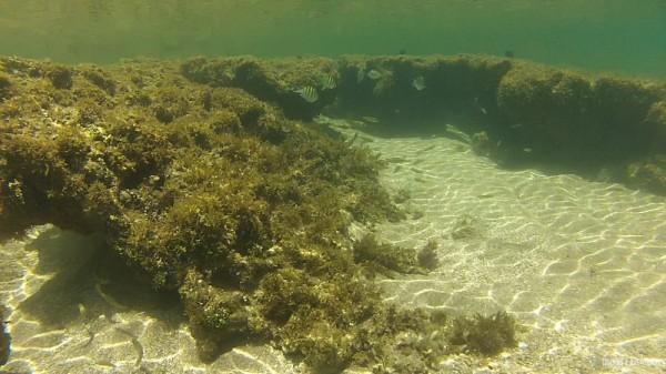 Snorkel-Morro-de-Sao-Paulo-2