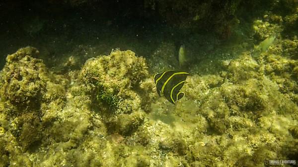 Snorkel-Morro-de-Sao-Paulo-3