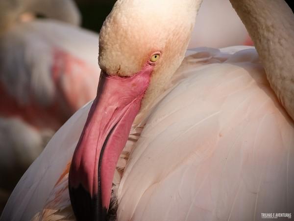Parque das Aves Foz do Iguacu-1