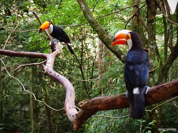 Parque das Aves Foz do Iguacu-4