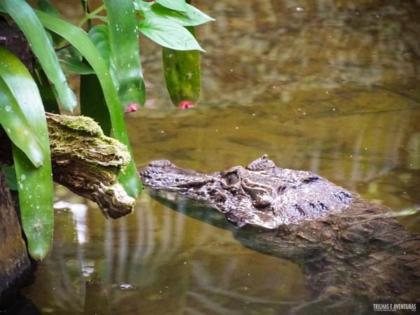 Parque das Aves Foz do Iguacu-6