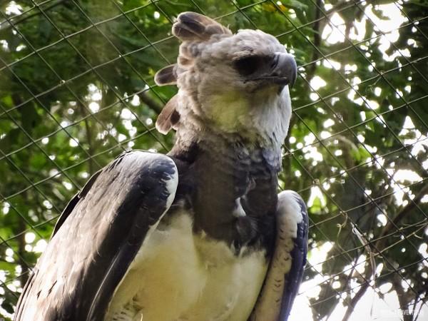 Parque das Aves Foz do Iguacu-7