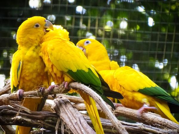 Parque das Aves Foz do Iguacu-8