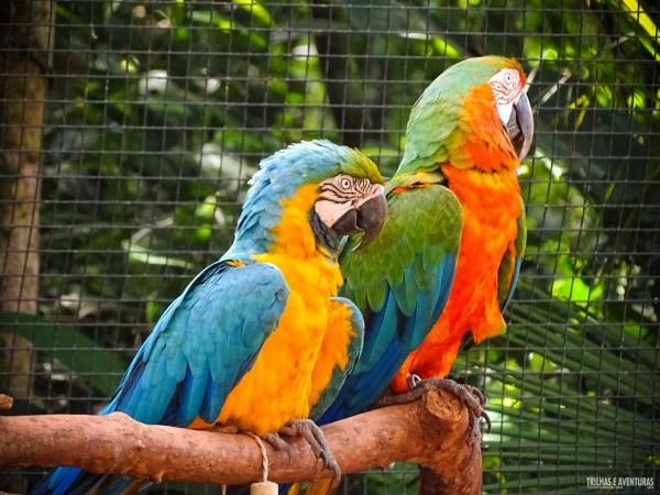 Parque das Aves Foz do Iguacu-9