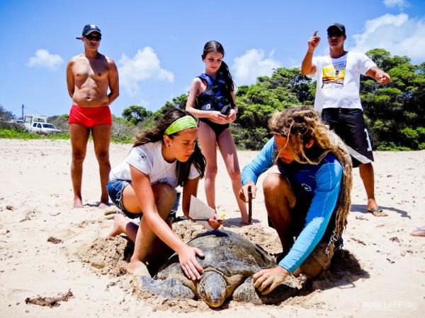 Captura tartarugas sueste Noronha 2