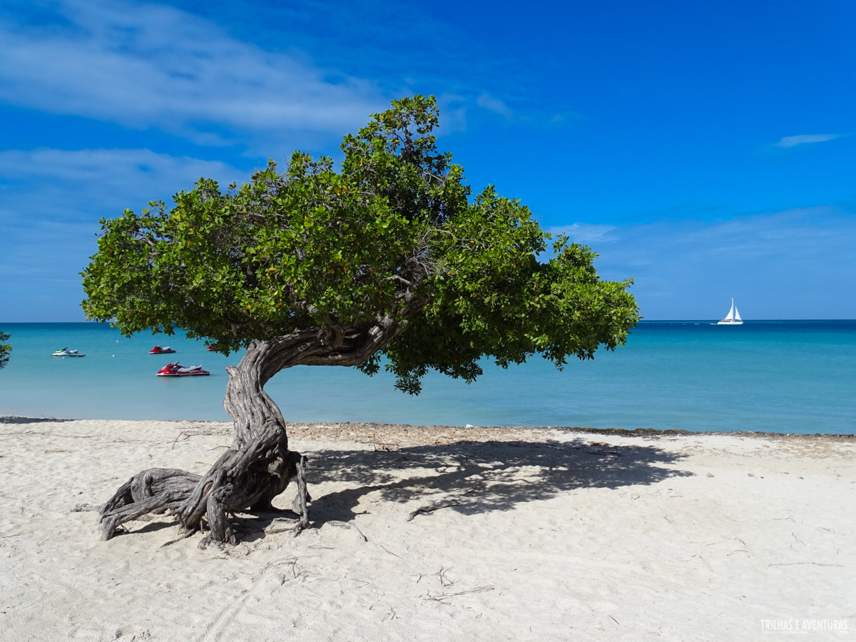 Eagle Beach - Pôr-do-sol e casamento na praia mais bonita de Aruba -  Viagens Possíveis