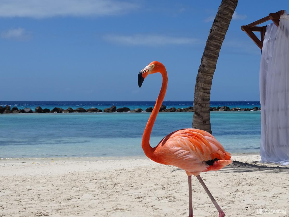 1b173eec3f24 Hotéis onde ficar em Aruba: Oranjestad, Palm Beach ou Eagle Beach?