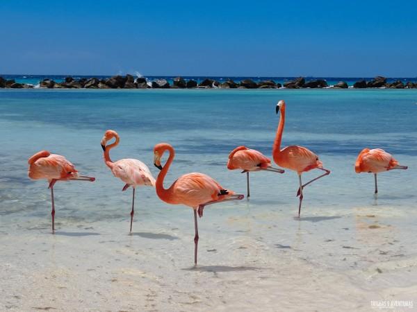 Renaissance Resort Oranjestad Aruba-8