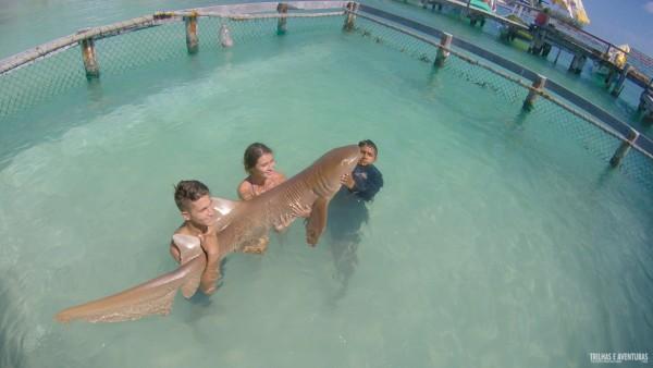 Interação com tubarão lixa na Playa Tiburon (NÃO CURTI NEM VER)