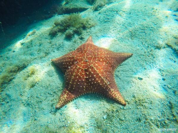 Estrela do mar encontrada na Lagoa Azul em Ilha Grande - RJ