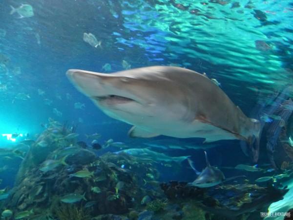 Ripleys Aquarium de Toronto-10