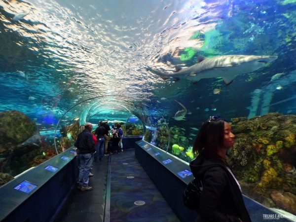 Ripleys Aquarium de Toronto-11