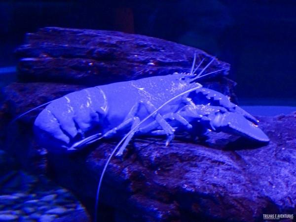 Ripleys Aquarium de Toronto-4