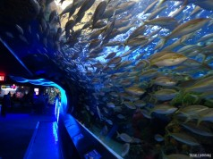 Ripleys Aquarium de Toronto