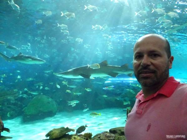 Ripleys Aquarium de Toronto-9
