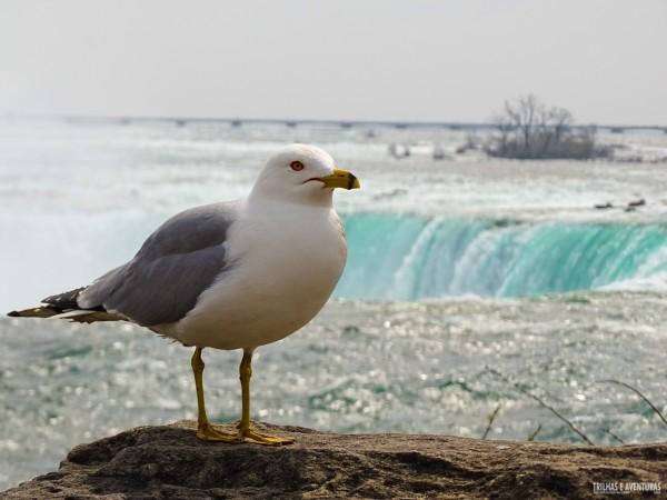 Uma das moradoras de Niagara Falls