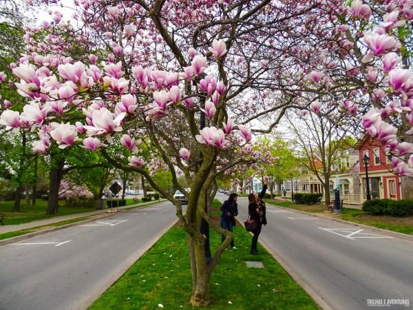 Os canteiros centrais são todos floridos em Niagara-On-The-Lake