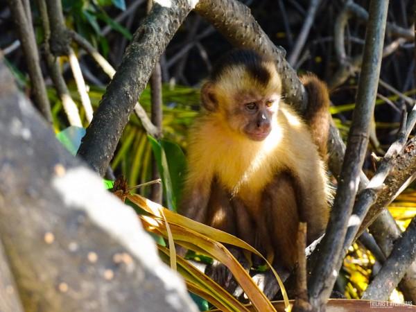 Porto dos Macacos