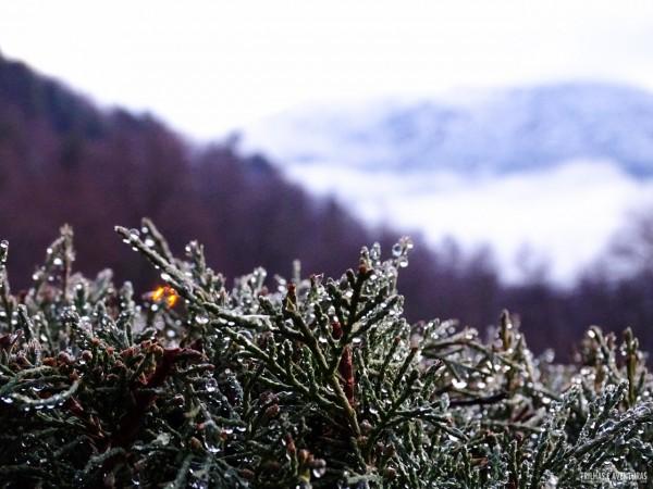 Nada mal acordar com essa vista congelada em Malalcahuello durante o inverno