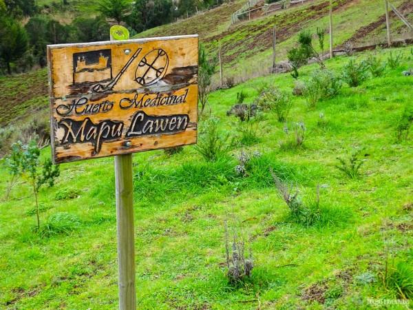 Horta de plantas medicinais do povo Mapuche