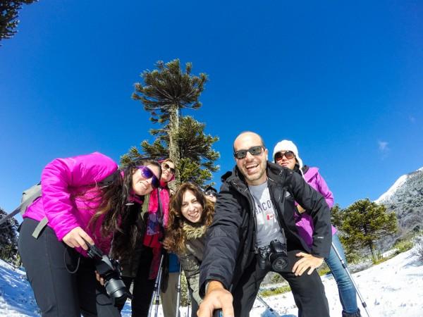 Grupo de amigos aos pés da araucária milenar em Corralco
