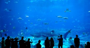 Georgia Aquarium em Atlanta